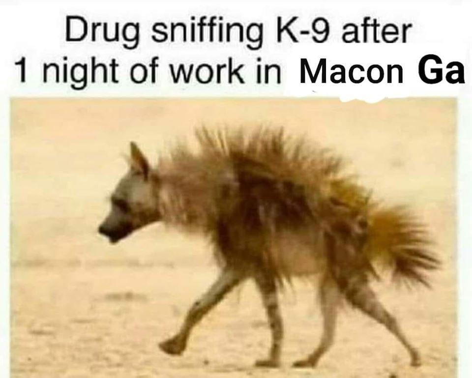 drug sniffing dog.jpg